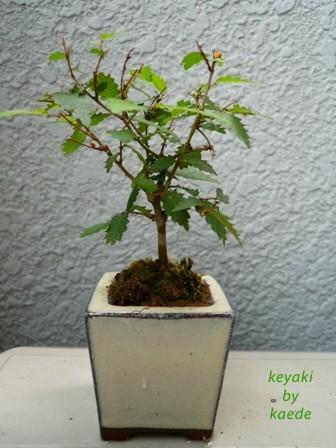 盆栽100625-1b.JPG