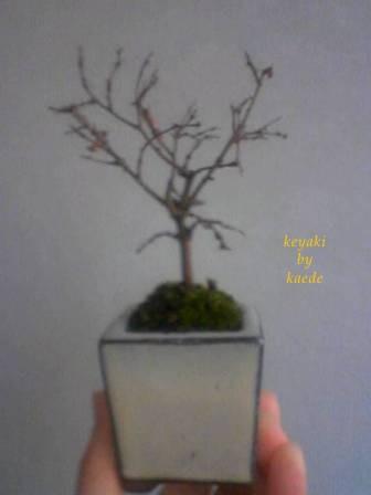 盆栽101219-1.jpg