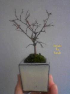 盆栽101219-1s.jpg