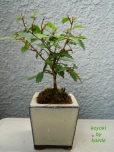 盆栽100625-1bs.JPG