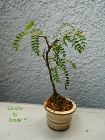 盆栽100625-2b.JPG