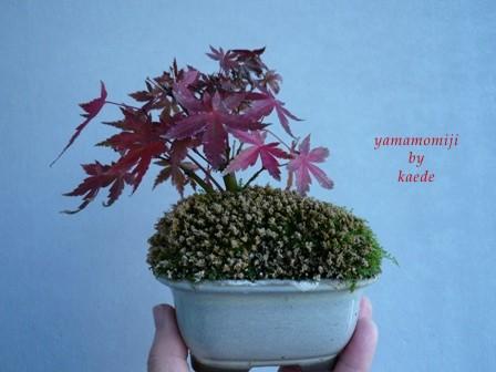 盆栽101130-06b.JPG